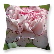 Creamy White With Red Picotee Carnation Throw Pillow