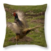 Crowing Pheasant Throw Pillow