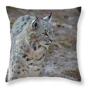 Curious Wandering Bobcat Throw Pillow