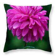 Dahlia Field Throw Pillow