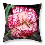 Dainty Dianthus Throw Pillow