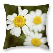 Daisies #1 Throw Pillow