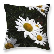 Daisy Day Throw Pillow