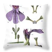 Darwins Orchis Pyramidalis, Illustration Throw Pillow