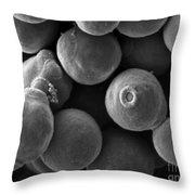 Debaryomyces Hanseni Yeast Throw Pillow
