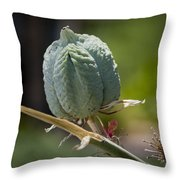 Desert Seed Pod 1 Throw Pillow