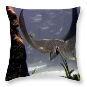 Devilray In Paradise Throw Pillow