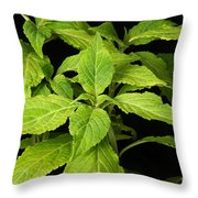 Diviners Sage Throw Pillow