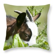 Domestic Pygmy Goat  Throw Pillow
