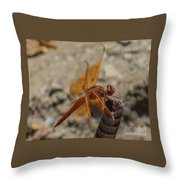 Dragonfly 18 Throw Pillow