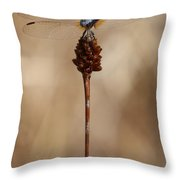 Dragonfly On Reed Throw Pillow