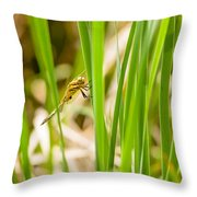 Dragonfly On Reed Leaf Throw Pillow