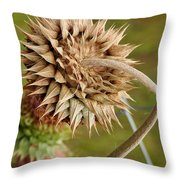Dried Up Thistle Throw Pillow