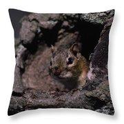 Eastern Chipmunk In Tree Throw Pillow
