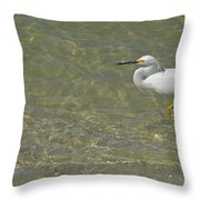 Eastern Great Egret In Florida Throw Pillow