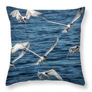 Elegant Terns Diving For Fish Throw Pillow