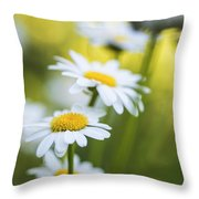 Elegant White Daisies Throw Pillow