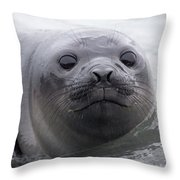 Elephant Seal Pup Throw Pillow