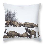 Elk Herd In The Snow Throw Pillow