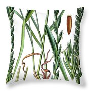 Elymus Repens, Commonly Known As Couch Grass Throw Pillow