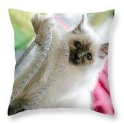 Ernie The Birman Kitty Throw Pillow