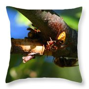 European Hornets Throw Pillow