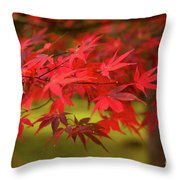 Fall Color Maple Leaves At The Forest In Aomori, Japan Throw Pillow