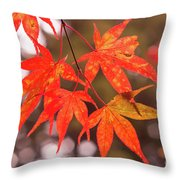 Fall Color Maple Leaves At The Forest In Kochi, Japan Throw Pillow