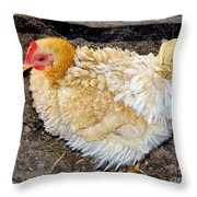Feathered Finery Throw Pillow