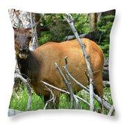 Female Elk Yellowstone Throw Pillow