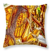 Field Corn Ready For Harvest Throw Pillow