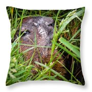 Fly Resting On The Groundhog's Nose Throw Pillow