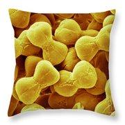 Forget-me-not Pollen, Sem Throw Pillow