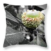 Found An Acorn Throw Pillow
