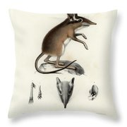 Four-toed Elephant Shrew Throw Pillow by J D L Franz Wagner