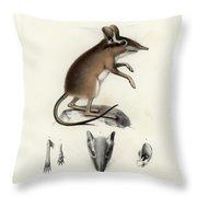 Four-toed Elephant Shrew Throw Pillow