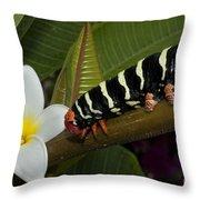 Frangipani Tree And Caterpillar Throw Pillow