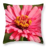 Fuchsia Pink Zinnia From The Whirlygig Mix Throw Pillow
