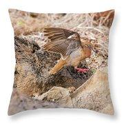Galapagos Dove In Espanola Island. Throw Pillow