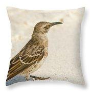 Galapagos Hood Mockingbird Throw Pillow