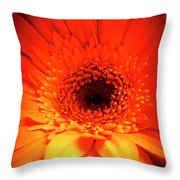 Gerbera Daisy Detail Throw Pillow