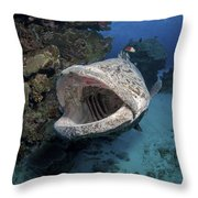 Giant Grouper, Great Barrier Reef Throw Pillow