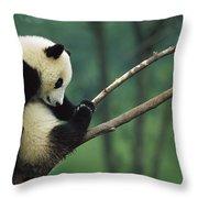 Giant Panda Ailuropoda Melanoleuca Year Throw Pillow