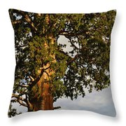 Giant Sequoia Throw Pillow