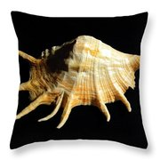 Giant Spider Conch Seashell Lambis Truncata Throw Pillow