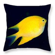 Golden Damselfish Throw Pillow