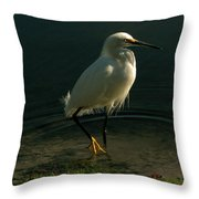 Golden Slippers Throw Pillow