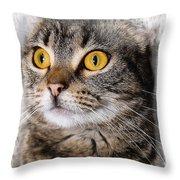 Goldeneye Throw Pillow