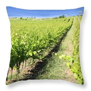 Grapevines In A Vineyard Throw Pillow