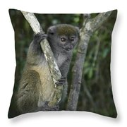 Gray Bamboo Lemur Throw Pillow